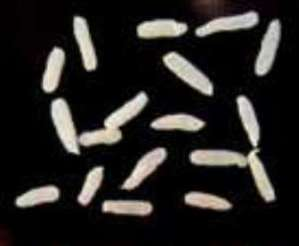 Worming Puppies on Worms In Dogs Is A Common Canine Problem  Though It Is Fortunately